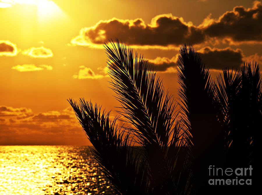 Abstract Photograph - Palm Tree Silhouette At Sunset On The Beach by Anna Om