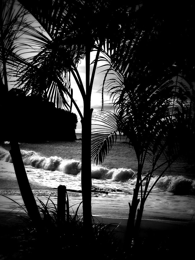Palm Photograph - Palm Tree Silouette by Kimberly Perry