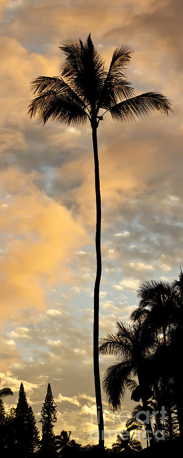 Palm Tree Sunset Hana Hawaii Photograph By Dustin K Ryan