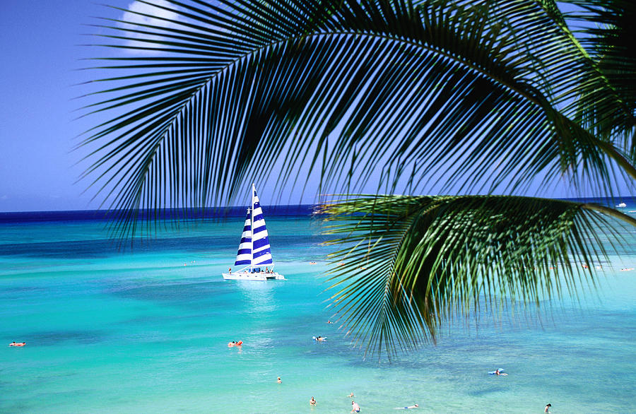 Horizontal Photograph - Palm Tree, Swimmers And A Boat At The Beach, Waikiki, United States Of America by Ann Cecil