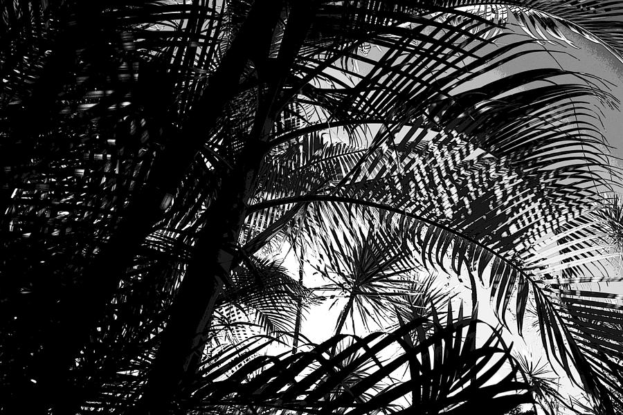 Palm Trees Photograph by Colleen Cannon