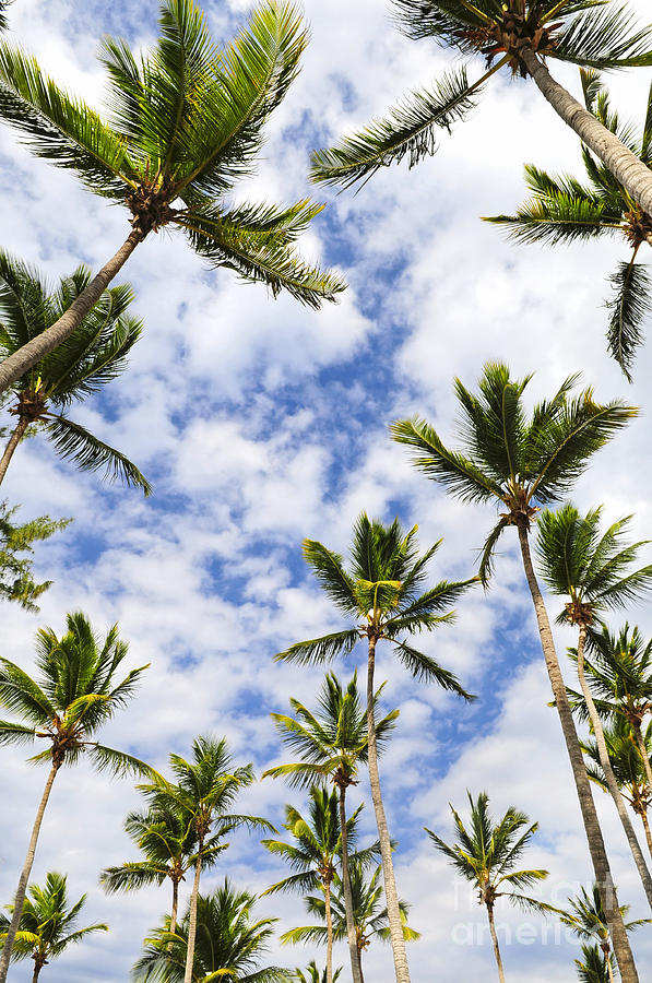 Palm Photograph - Palm Trees by Elena Elisseeva