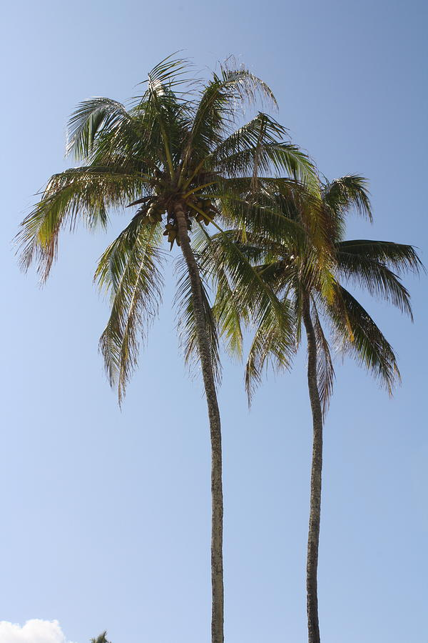 Palm Trees Photograph - Palm Trees In Love by Natalija Wortman