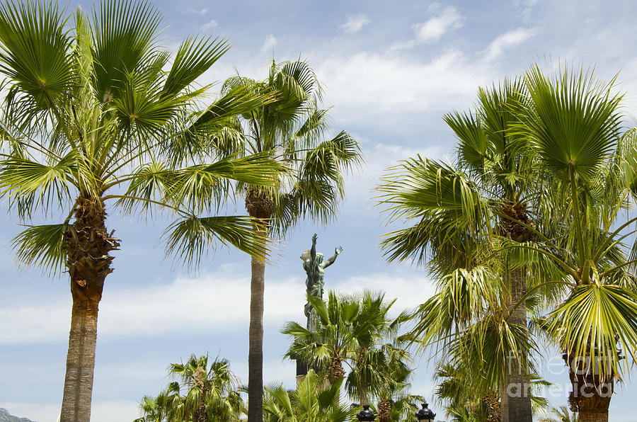 Travel Photograph - Palm Trees In Spain by Perry Van Munster
