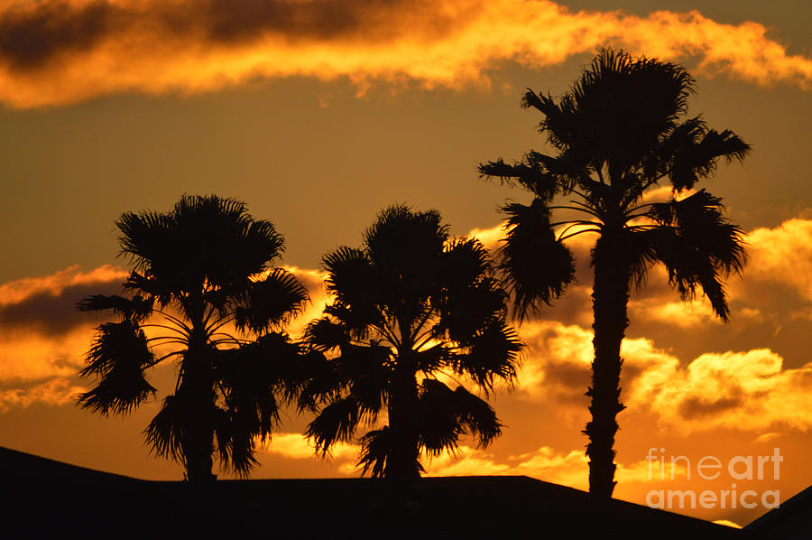Sunrise Photograph - Palm Trees In Sunrise by Susanne Van Hulst