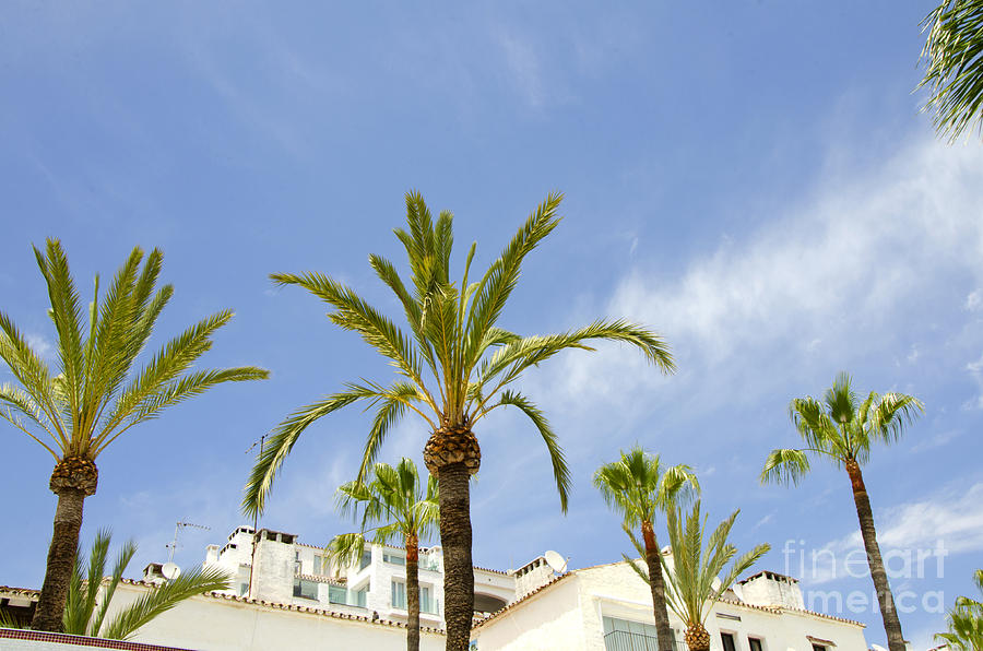 Palm Tree Photograph - Palm Trees In The Blue by Perry Van Munster