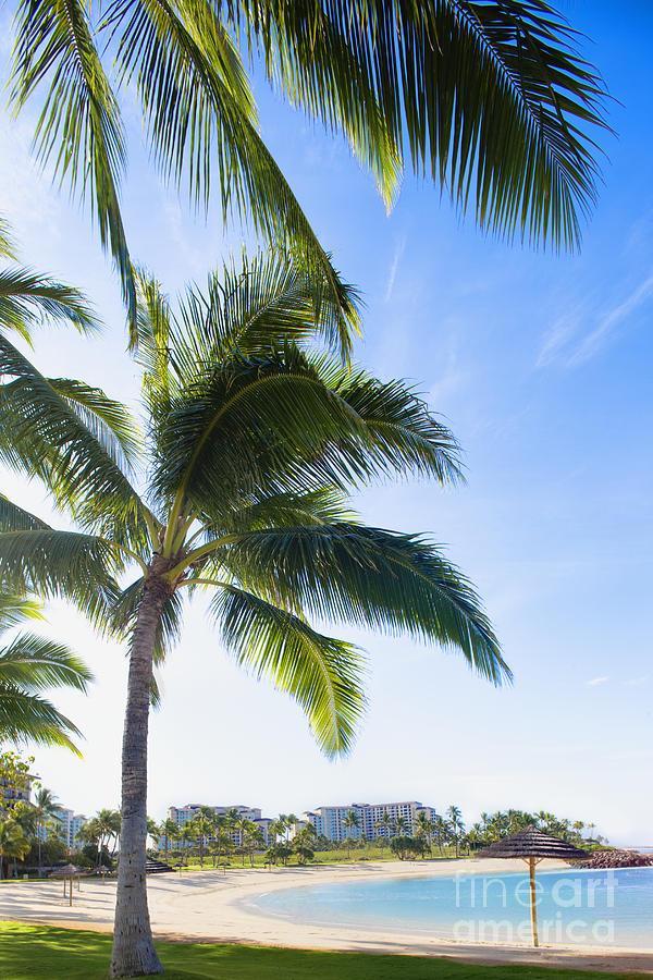 Palm Trees On The Beach In Ko Olina Beach Park, Oahu