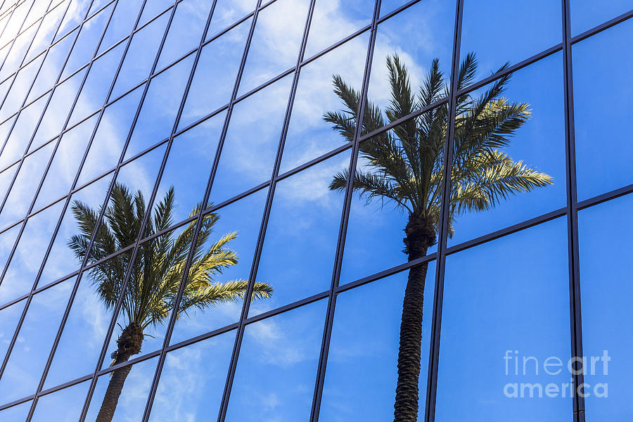 America Photograph - Palm Trees Reflection On Glass Office Building by Paul Velgos