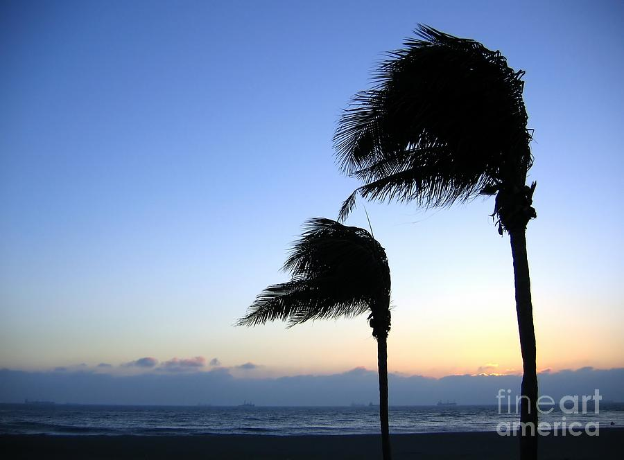 Solitude Photograph - Palm Trees Swaying In The Wind by Yali Shi
