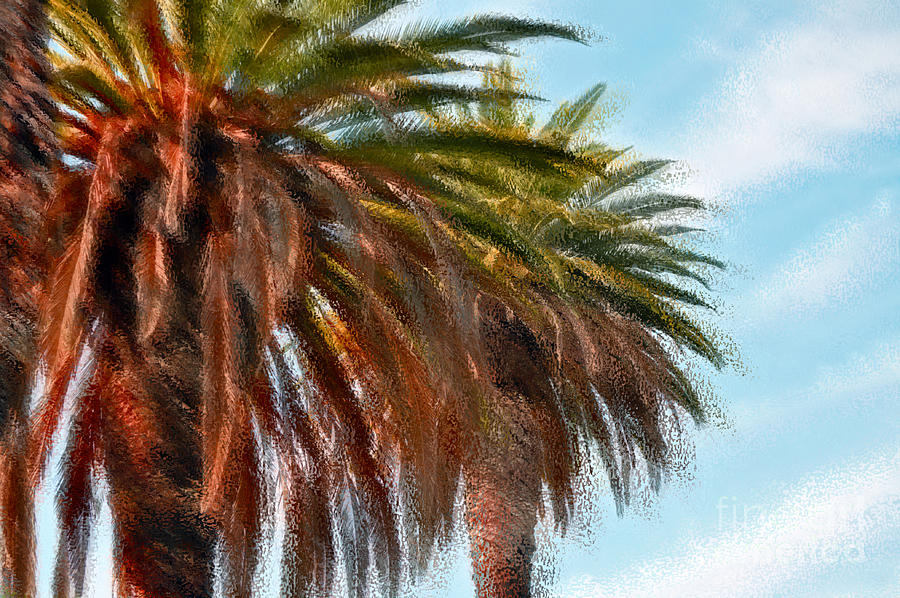 Palm Photograph - Palms Aglo by Gwyn Newcombe