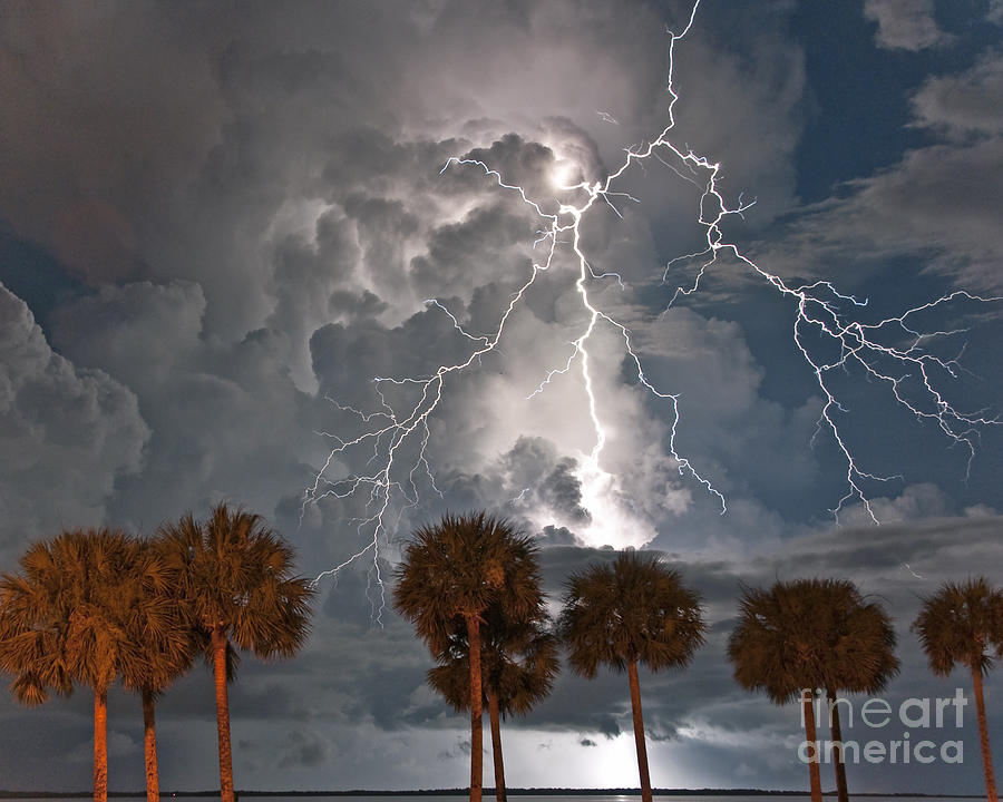 Lightning Photograph - Palms And Lightning  by Stephen Whalen