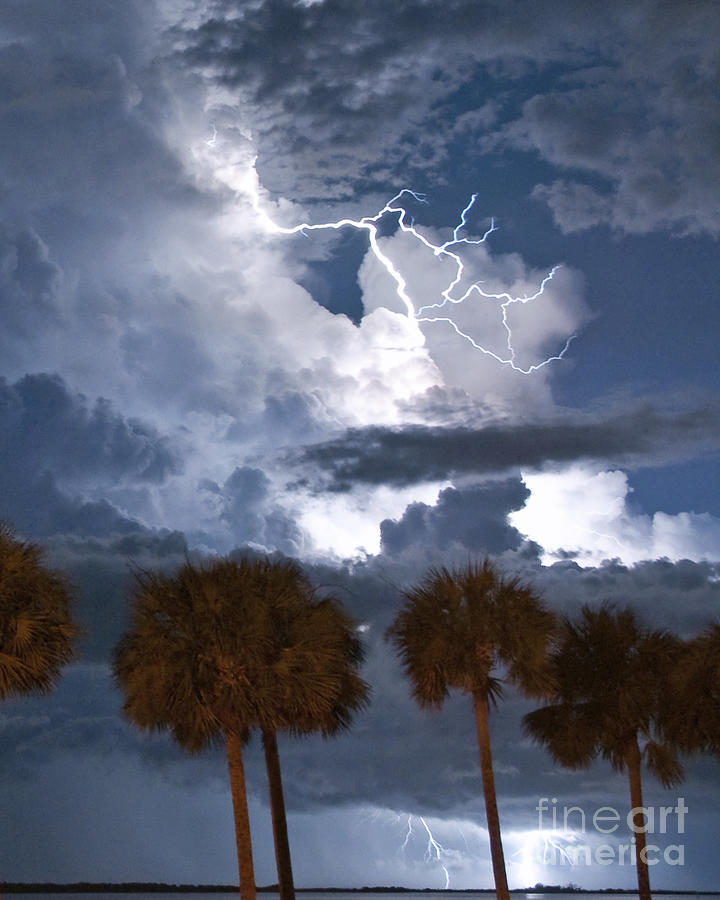 Lightning Photograph - Palms And Lightning 4 by Stephen Whalen