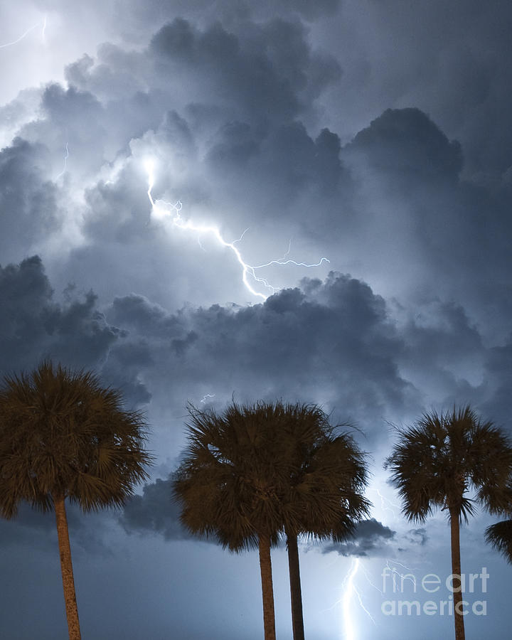 Lightning Photograph - Palms And Lightning 5 by Stephen Whalen
