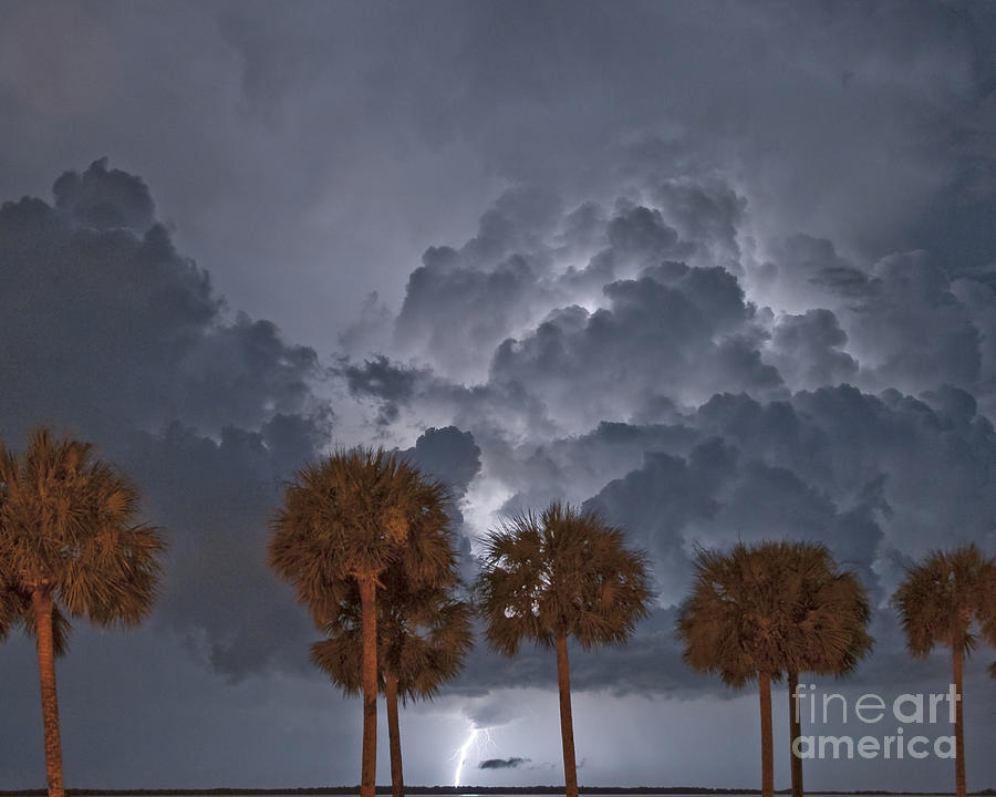 Lightning Photograph - Palms And Lightning 7 by Stephen Whalen
