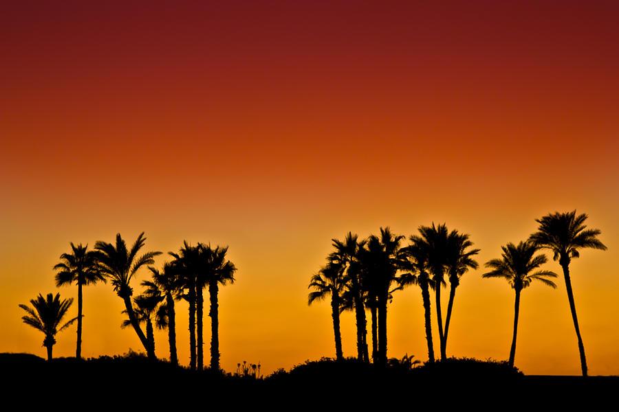 Palm Photograph - Palms At Sunset by Nadya Ost