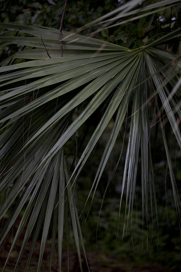 Palm Trees Photograph - Palms by Christina Durity