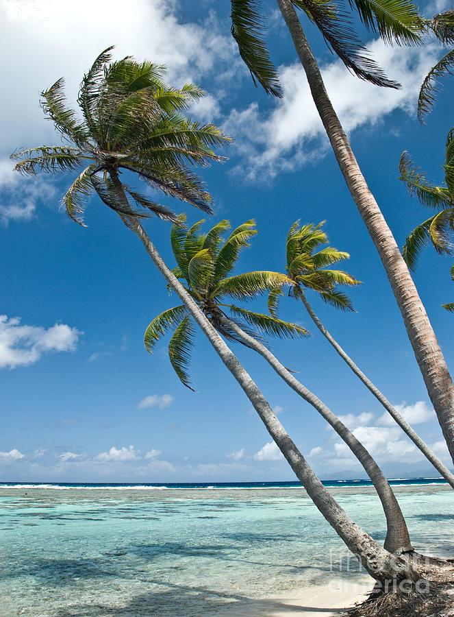 Tahiti Photograph - Palms In The Wind by Jim Chamberlain