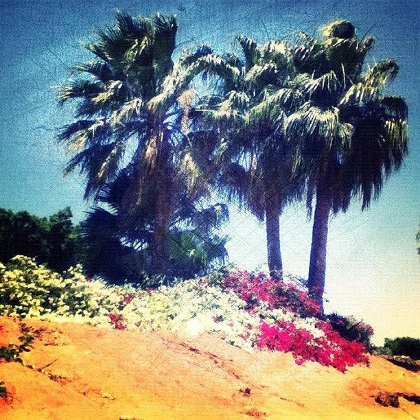 Woodcamera Photograph - #palms #trees #beach #webstagram by Andrea Bigiarini