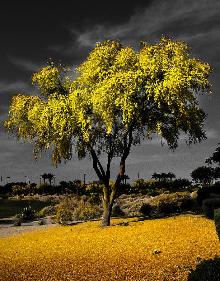 Paloverfe Photograph - Palo Verde by Jim Painter