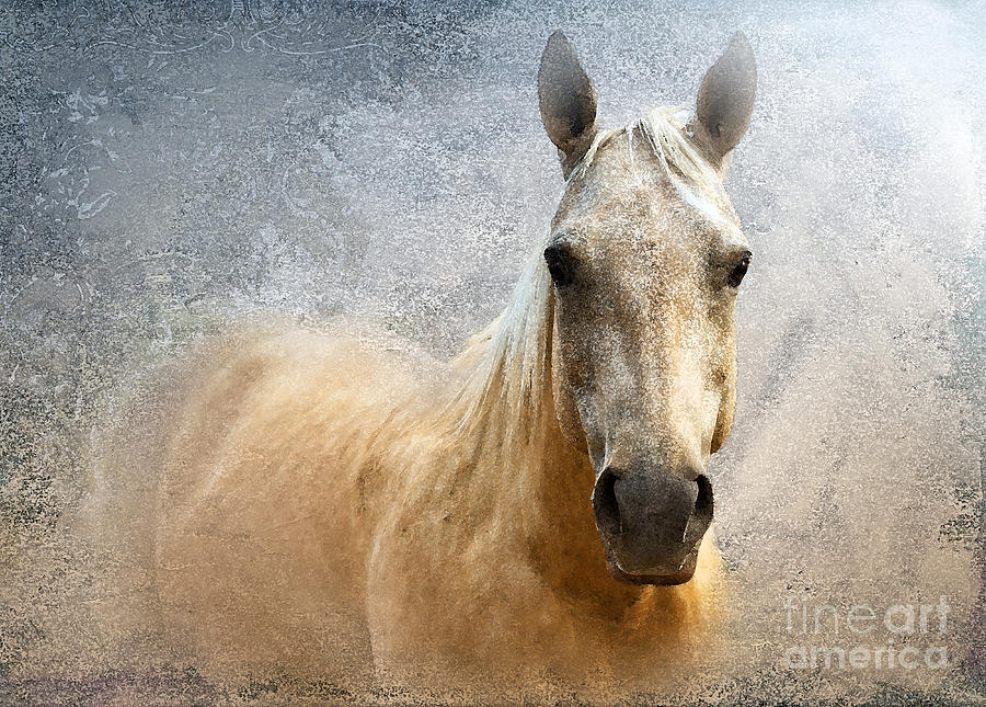 American Quarter Horse Photograph - Palomino by Betty LaRue