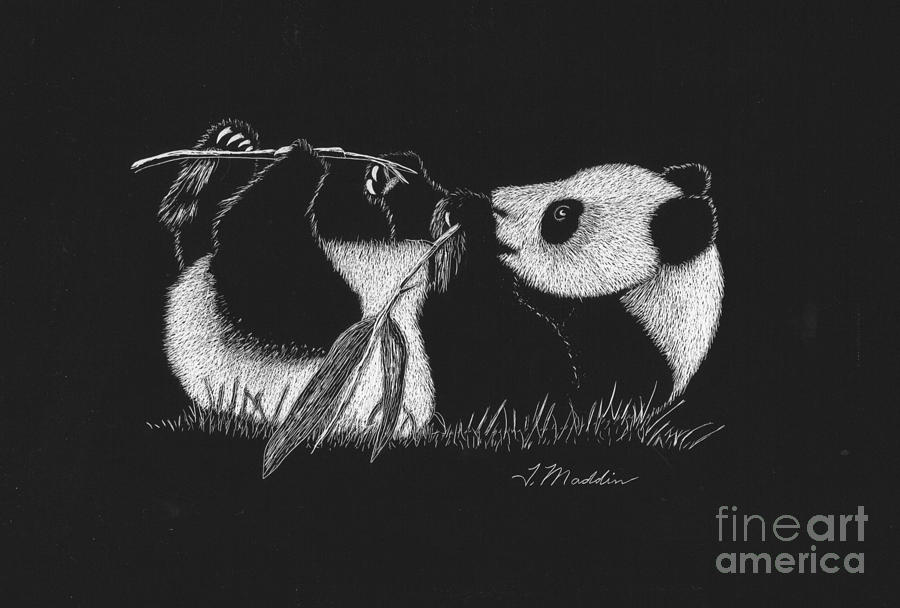Black And White Drawing - Panda Laying by Terri Maddin-Miller