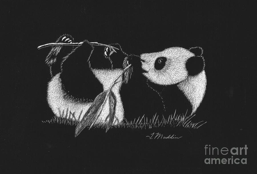 Scratch Art Drawing - Panda Laying by Terri Maddin-Miller