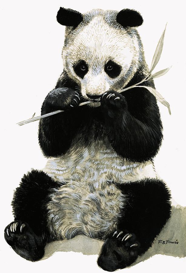 Panda Painting By R B Davis