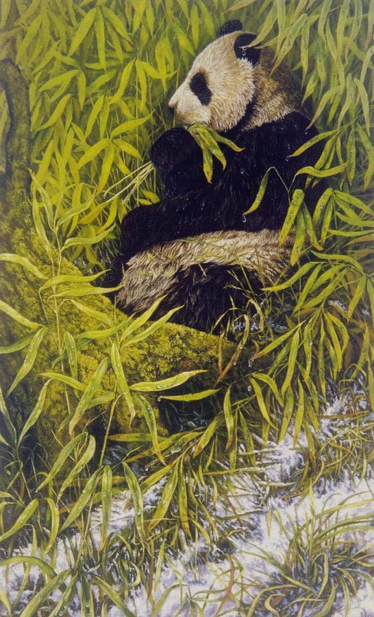 Wildlife Painting - Panda by Steven Wood