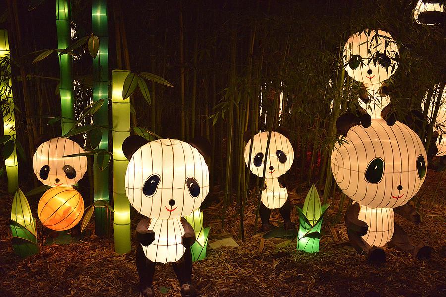 Pandamonium Photograph - Pandamonium by William Fields