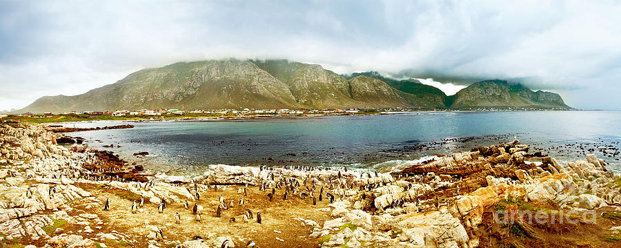 Africa Photograph - Panoramic Landscape With Penguins by Anna Om