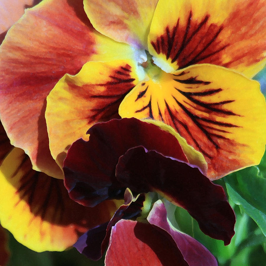 Pansies Photograph - Pansies by Donna Corless
