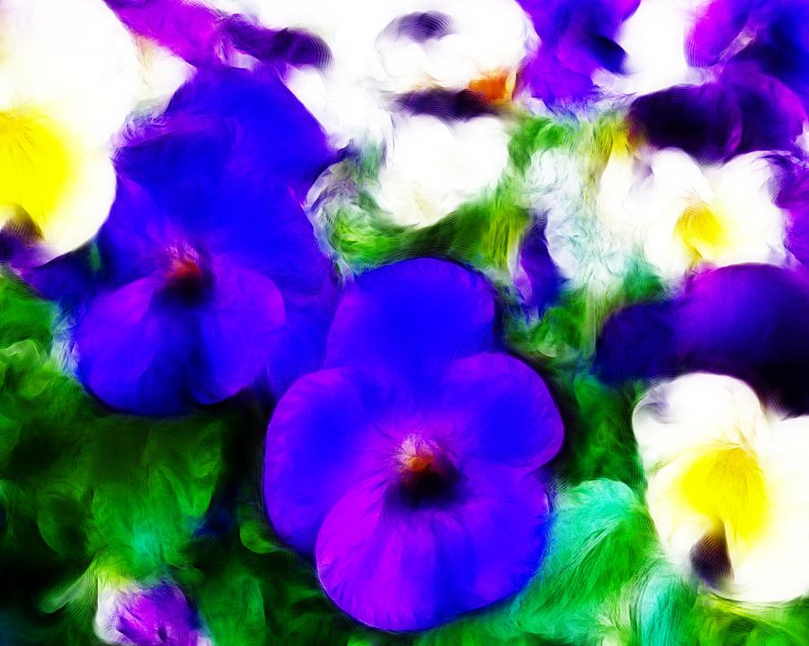 Pansies Photograph - Pansies by Sharon Lisa Clarke