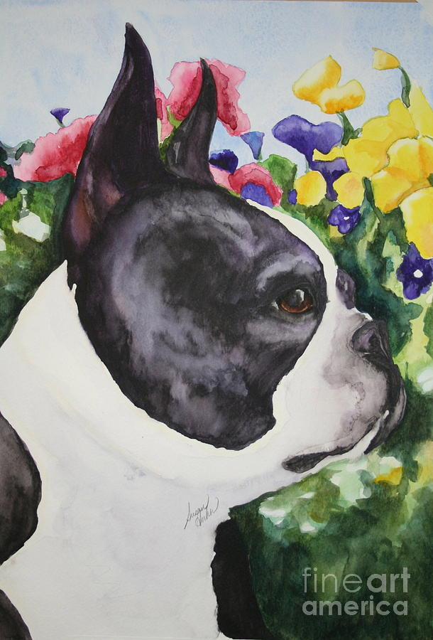 Boston Terrier Painting - Pansy by Susan Herber