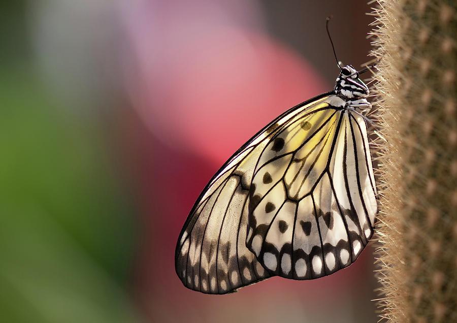 Horizontal Photograph - Papillon by Pndtphoto