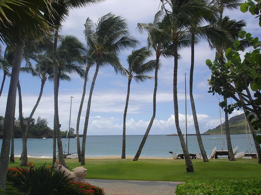Hawaii Photograph - Paradise  by Dee  Savage