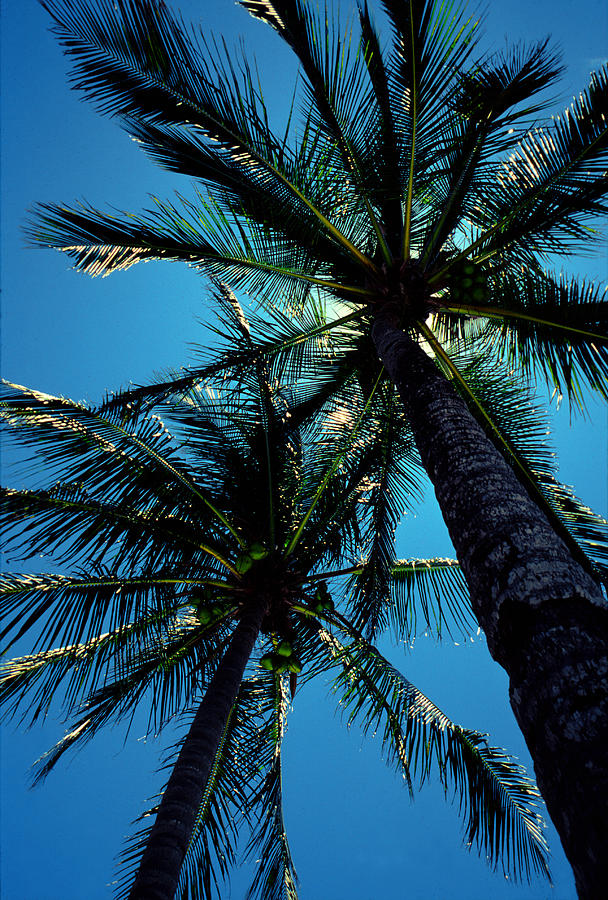 Palm Trees Photograph - Paradise Island by Mike Flynn