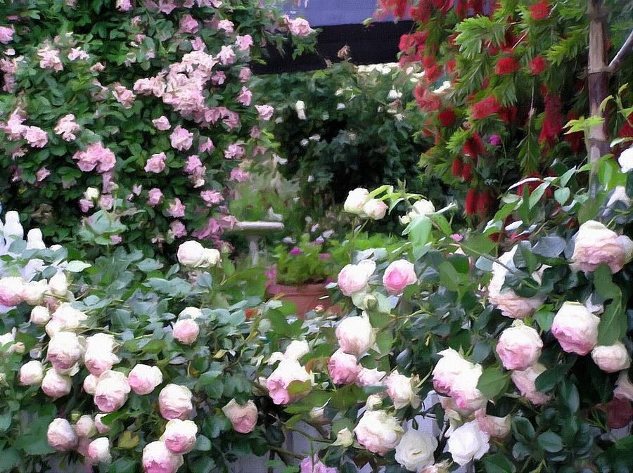 Paradise Of Roses Photograph by Helen Penwill