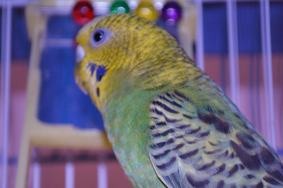 Color Photograph - Parakeet by Saifon Anaya