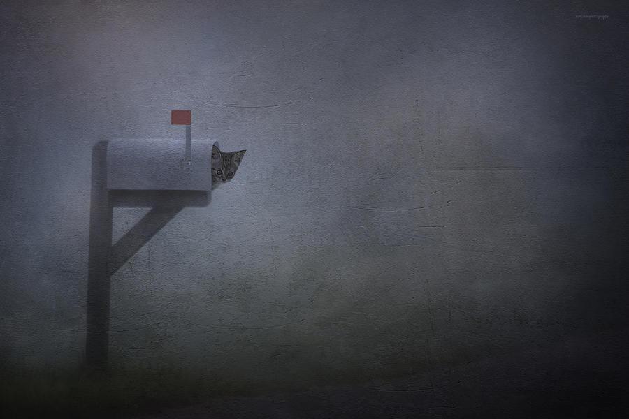 Animal Photograph - Parcel Post by Ron Jones