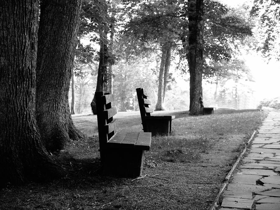 Park Bench In Black And White Photograph By Lj Lambert