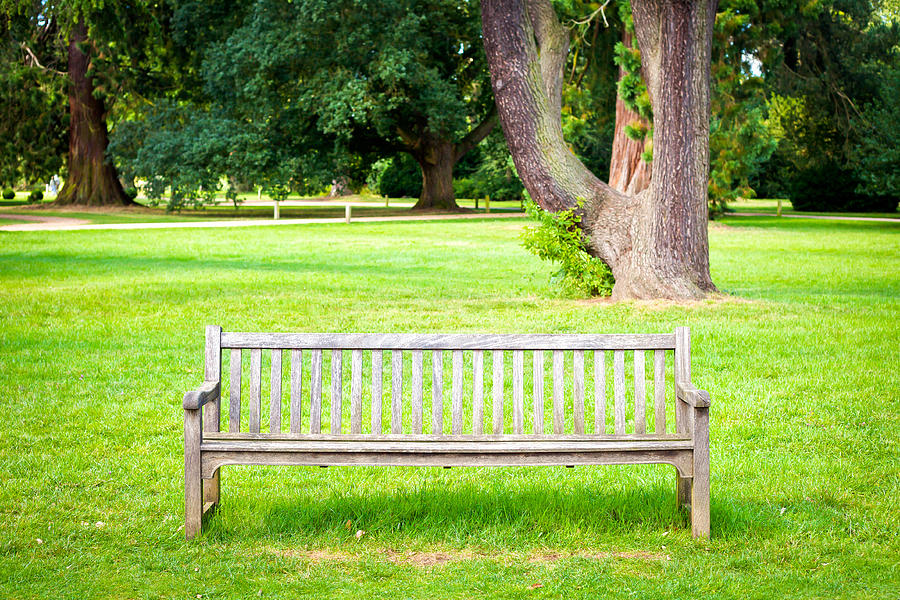 Alone Photograph - Park Bench by Tom Gowanlock