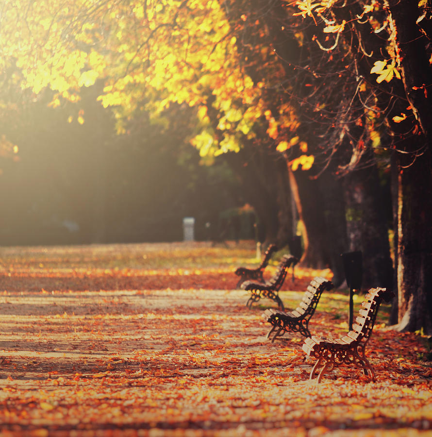 Vertical Photograph - Park Benches In Fall by Julia Davila-Lampe