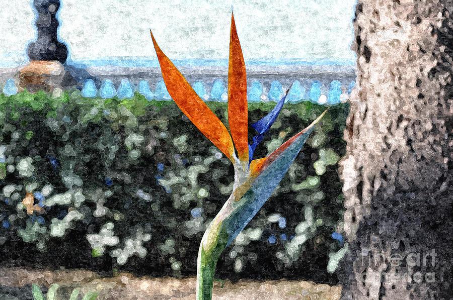 Orange Photograph - Park Flower by Slavi Begov