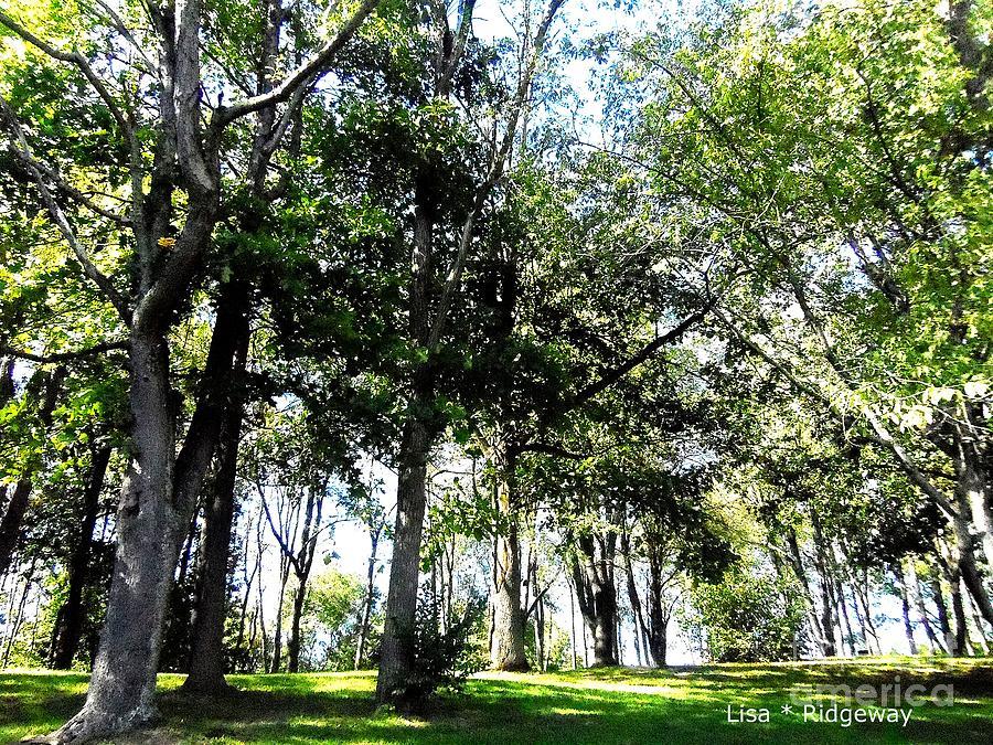 Trees Mixed Media - Park Trees by Lisa  Ridgeway
