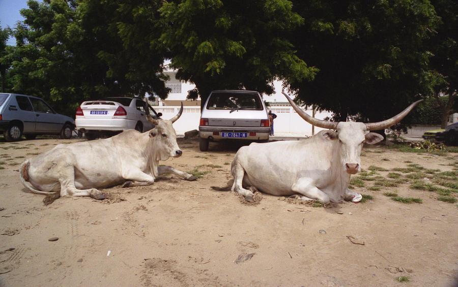 Parking Attendants Dakar Senegal Photograph by Wayne King
