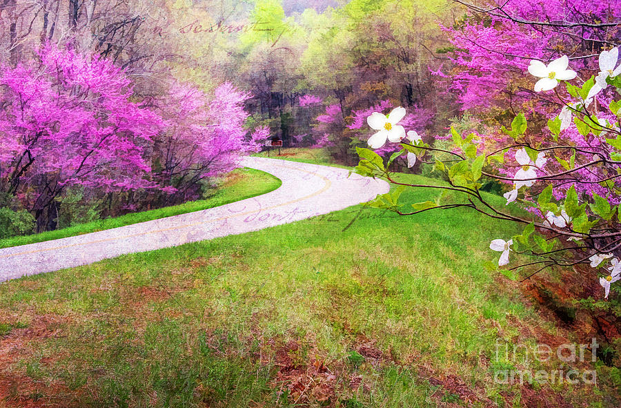 Beautiful Photograph - Parkway Kind Of Spring by Darren Fisher