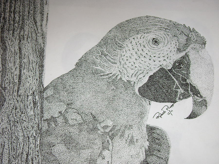 Parrot Photograph - Parrot by Robert Plopper