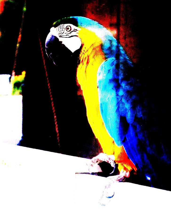 Parrot Photograph by Todd Sherlock