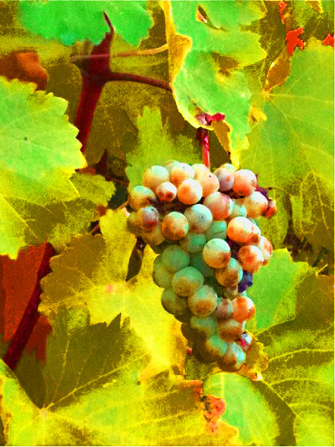 Paschke Grapes by Kathy Corday