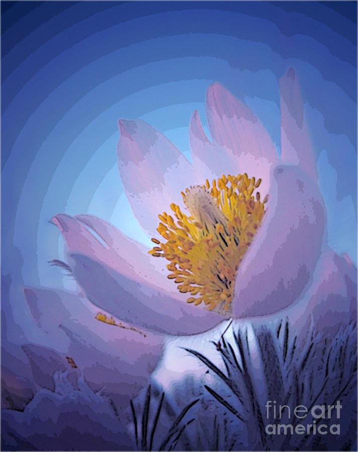 Pasque Flower Photograph - Pasque Flower by Vivian Christopher